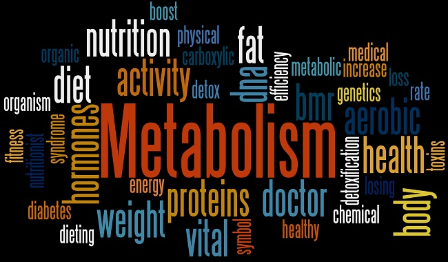 Mini symposium on the role of metabolism and diet on the development of brain diseases